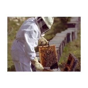 doneaza-un-stup-sau-un-roi-de-albine-pentru-o-familie-saraca-si-ajuta-i-sa-isi-dezvolte-o-ferma-apicola